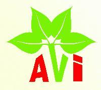 A. V. International