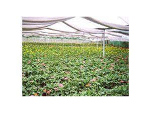 Gardening Shade Net