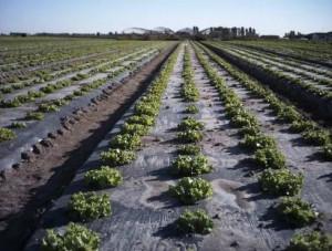 Agricultural Plastic Mulch Film