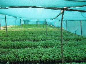 Durable Agro Shade Net