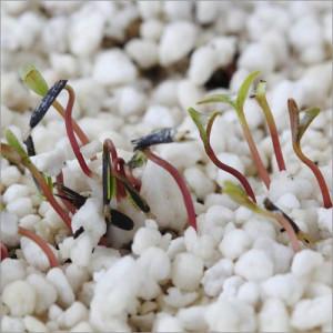 Horticulture Perlite