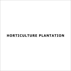 Horticulture Plantation