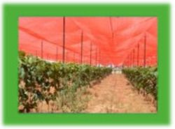 Sunsafe Agriculture Shade Net