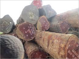 African Padauk Timber